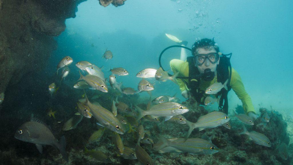 Mergulho em Maragogi Alagoas