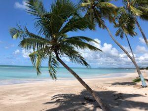 Famoso coqueiro da Praia de Antunes