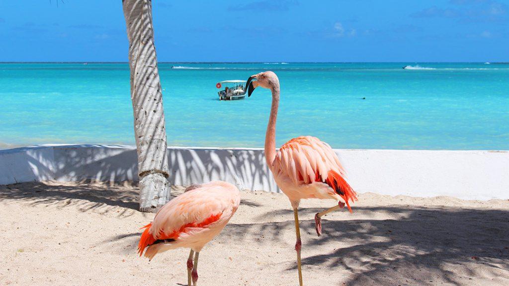 Flamingos em Maragogi, na Praia de Barra Gande