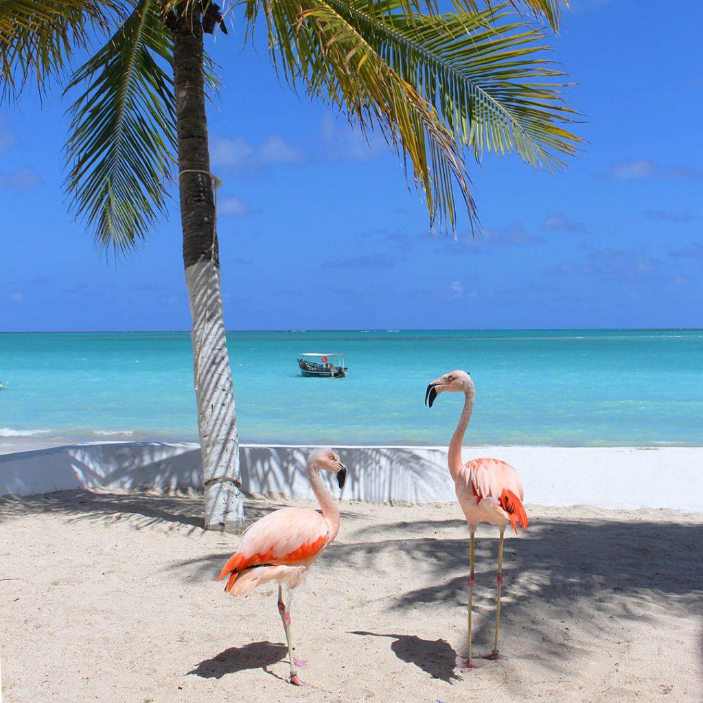 Flamingos em Maragogi