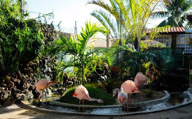 Flamingos em Maragogi na Pousada Sol e Mar